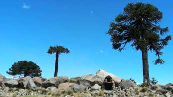 at Rio Agrio in Argentina, a small and simple shrine under Araucaria trees.