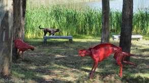 """Atchuggarry sculpture park: part of """"Juguemos en el Bosque"""" by Janinne Wolfsohn, 2011"""