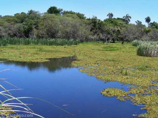 Esteros del Iberá: all water and floating vegetation