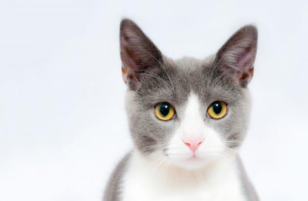 【夢占い】女性トラブルの暗示かも! 猫が出てくる夢の意味16選