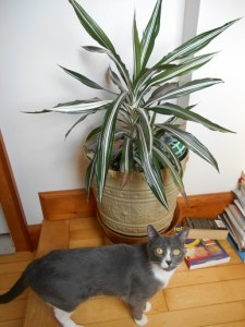 Cassie and the Corn Plant