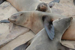 Seals Self Soothe with down time
