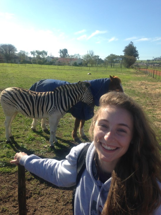 Kevin the zebra and his friend Julian