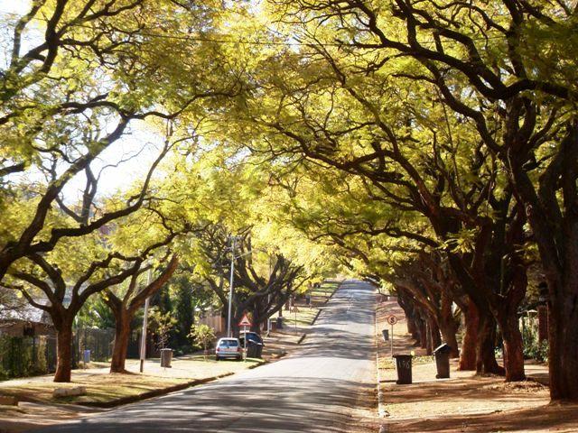 Pretoria - Jacaranda City!