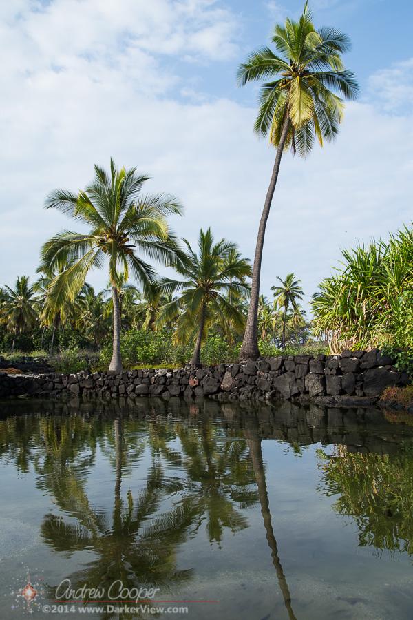 Palm & Pool