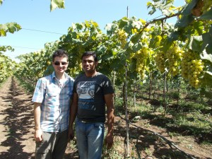At the grape farm
