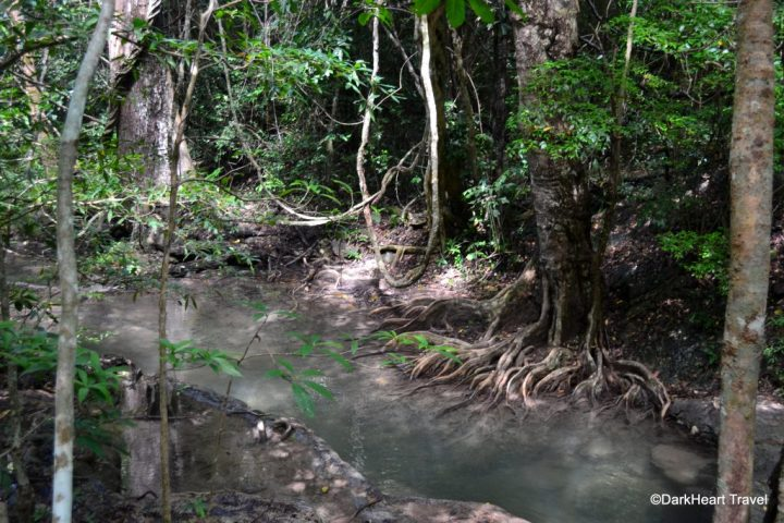 tree roots at Erawan