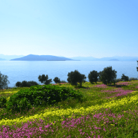 The Greek island of Aegina: wildflowers, beaches and 4,000 years of history