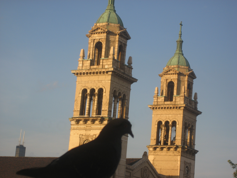 contemplating pigeon