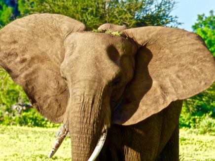 The Mystery: Approaching Elephant People, Deena Metzger
