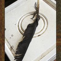 Antique Impressions: Crow Feather