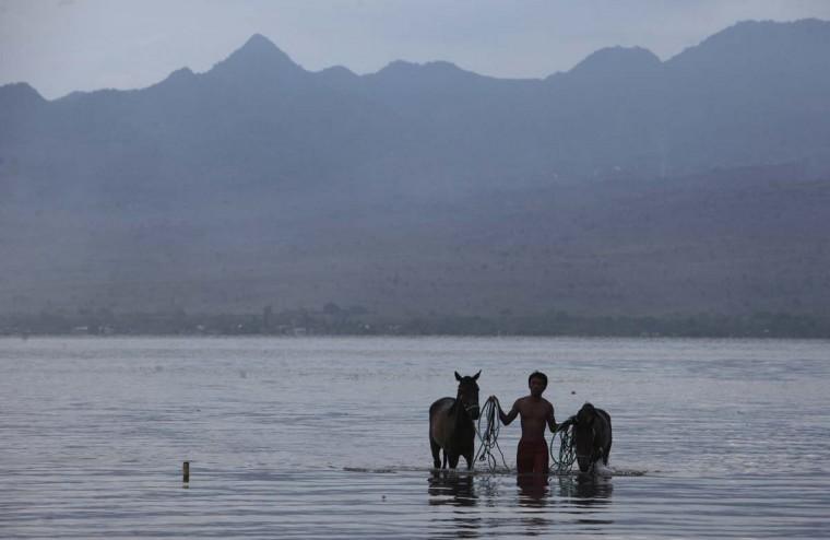 Человек идет со своей лошади после мытья их после гонки в Kalaki пляж на окраине Бима, на Sumbawa острова Индонезии, 18 ноября 2012 года.  (Beawiharta / Reuters)