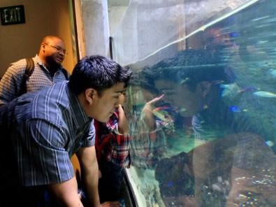 Nemo and Dory!