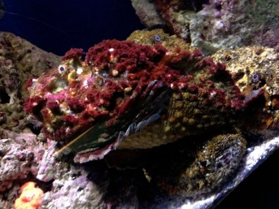 That would be a rock fish. You can barely tell its a fish.