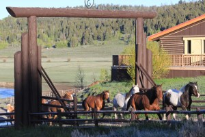 Grand Teton's , Running Horses, Wyoming, Horse, Guest Ranch,