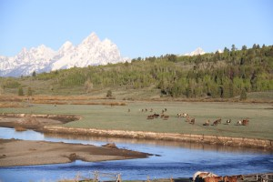 Scenic photo of horses with Grand Tetons in background, Western Guest Ranch near Jackson Hole and Yellowstone