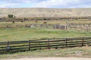 Horses in Montana Deer Park