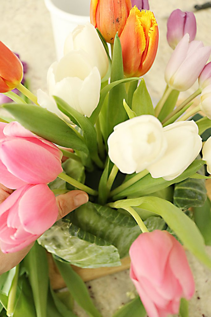 tulips-placed-in-cabbage