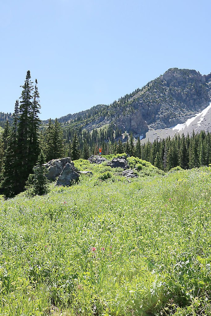 albion-basin-hiking-around-utah
