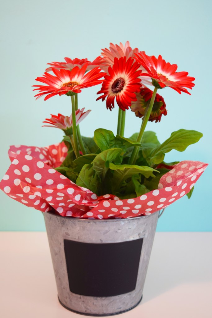 teacher gift potted plant in metal bucket with chalkboard labels