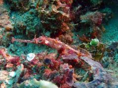 Daroyen Village Dive sites & Snorkel
