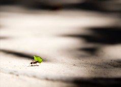 Read more about the article Killing Ants