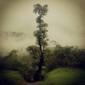 Mysterious looking tree