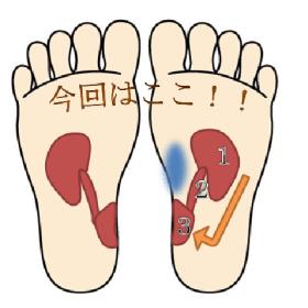 足裏のツボ