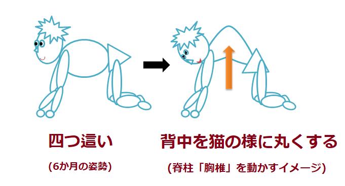 猫のポーズをする絵