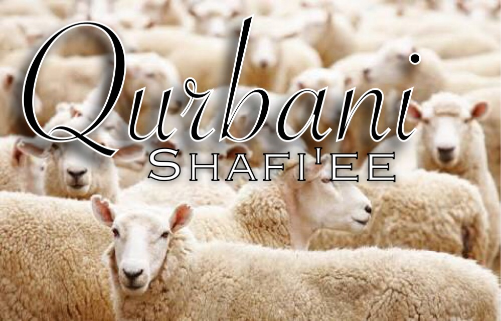 Simplified rules for Qurbani according to the Shafi'ee Madhab