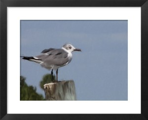 FotoSketcher - Cedar Key Bird