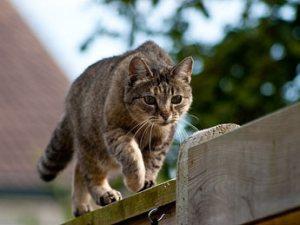 cat-fence-345kgs9210