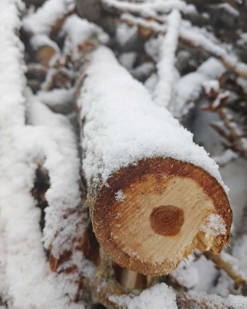 cut tree branch in the snow