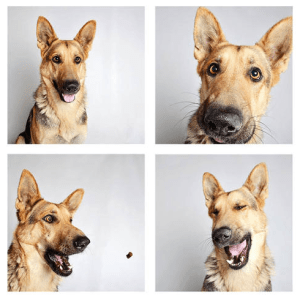 The Humane Society of Utah is having huge success finding homes for shelter dogs with photo booth style pictures.