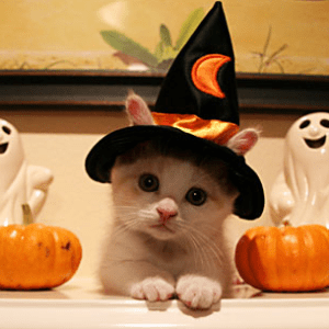 Would your kitten sport a sweet little witch's hat for Halloween?
