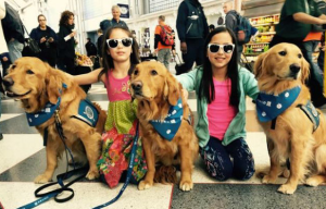 United Airlines is bringing therapy dogs to holiday travelers! They call the promotion #UnitedPaws