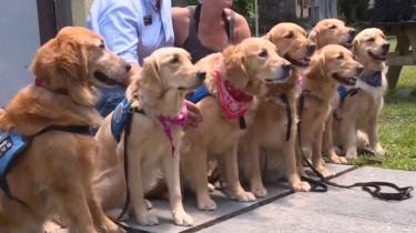 Comfort dogs arrive in Orlando to offer love and help with grieving.