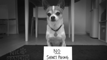 What happens when a chihuahua named Pancho suggests he and his human take a phone-free vacation.