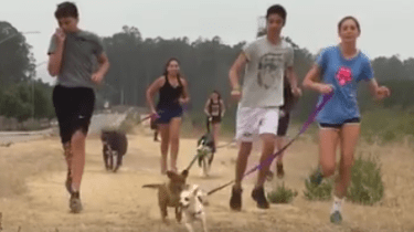 The St. Joseph High School Cross Country team did their morning run with dogs from the local animal shelter.