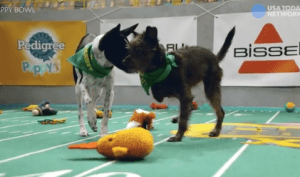 Animal Planet's Puppy Bowl XIII will featured dogs with special needs.