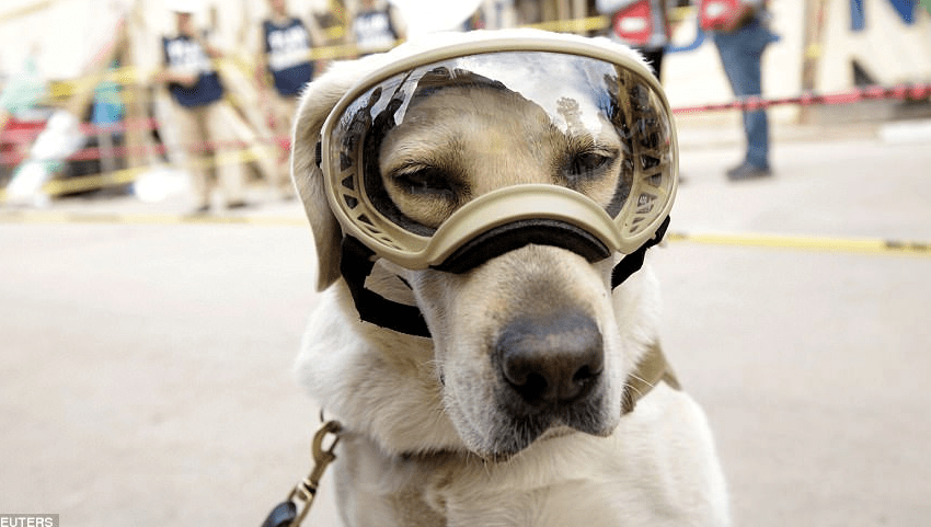 Frida The Navy Rescue Dog Has Saved  12 Lives And Counting In Mexico City Earthquake Rubble
