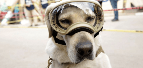 Frida, the Navy rescue dog has saved 12 lives and counting in the rubble of the Mexico City Earthquake.
