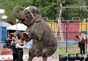 Three elephants in Connecticut just got a lawyer to win their freedom.
