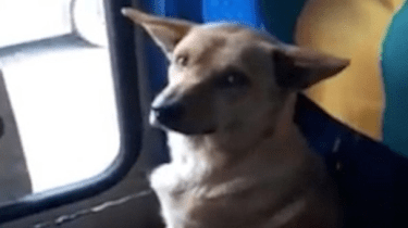 Kind bus driver lets stray dog ride his bus just to get out of the winter cold.