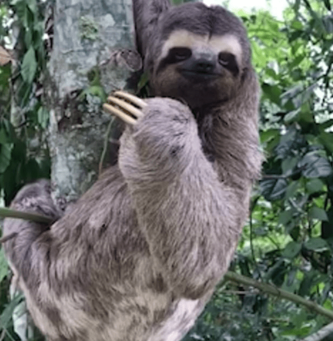 This is one happy and grateful sloth!