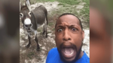 Rescue donkey sings Lion King song with his favorite human.
