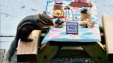 Chipmunk gets special daily meals thanks to bored restaurant reviewer.