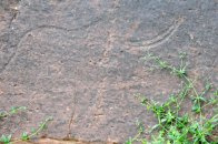 Gravure rupestre (éléphant)