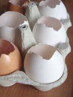 leere Eier