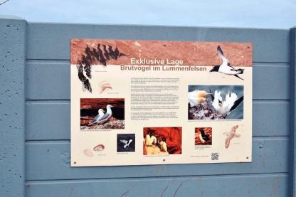 Helgoland - Lummen-Info